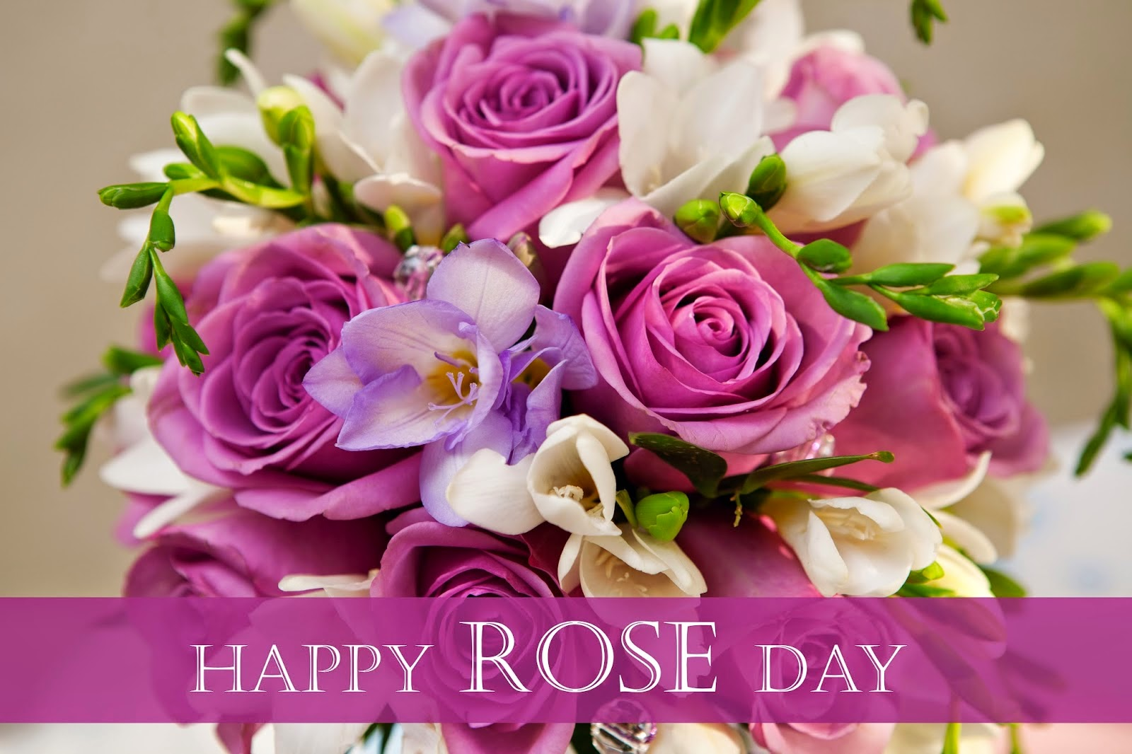 Wallpaper download for whatsapp - Download Rose Day Dp Images For Whatsapp Profile