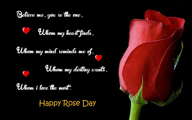 Rose Day Images for Whatsapp DP, Profile Wallpapers – Free Download