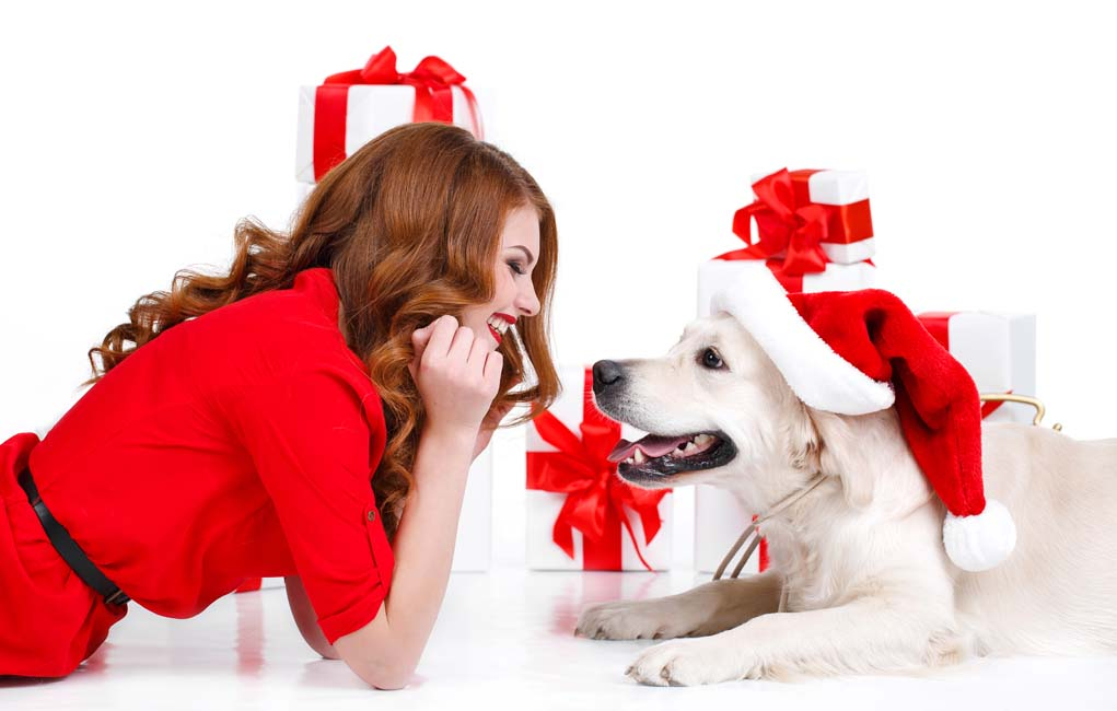 Gift Ideas for Dogs and Dog Parents