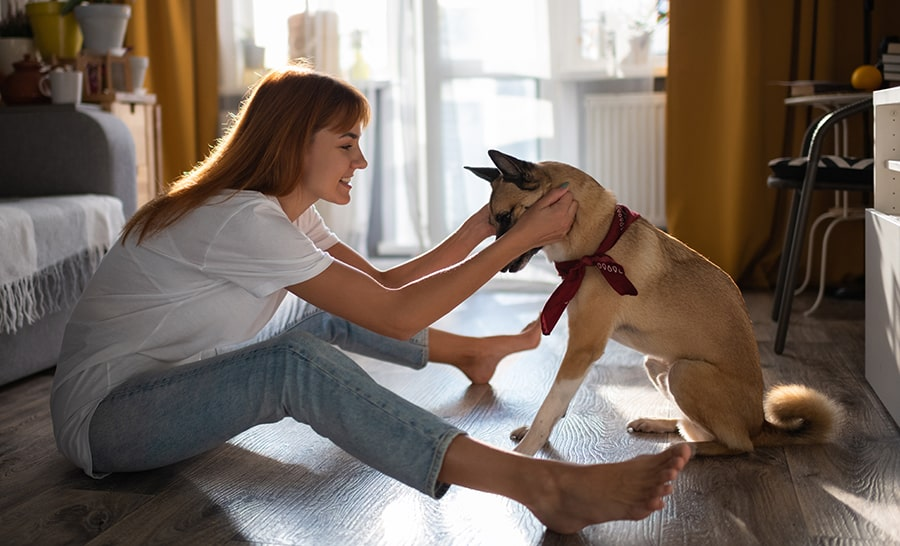 Tips To Make Your Dog Smarter